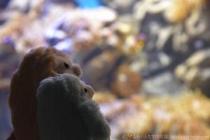 新江ノ島水族館水槽を眺めるいえたすとあにたす