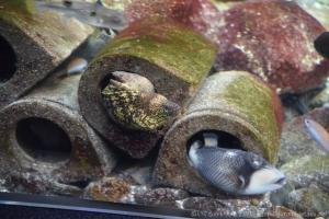 新江ノ島水族館お魚マンション